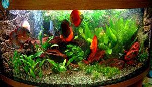 akvariumnyj-biznes