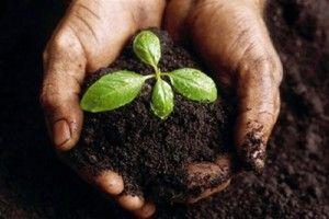 2 agrobiznes-idei