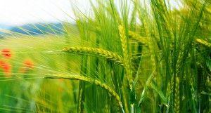 3 agrobiznes-idei
