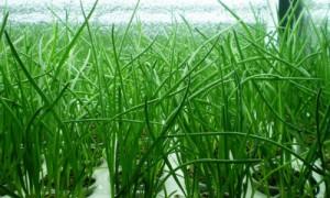 Выращивание зеленого лука как бизнес-идея