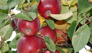 6 agrobiznes-idei