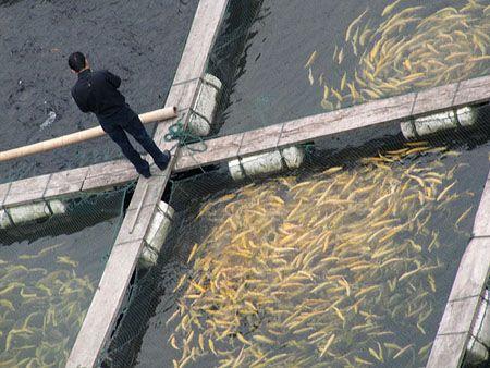 rybnyj-biznes-s-nulja